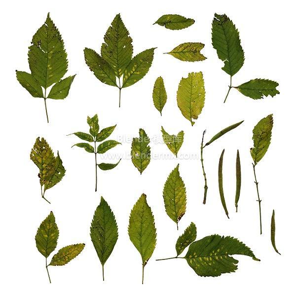 各种虫蛀树叶子